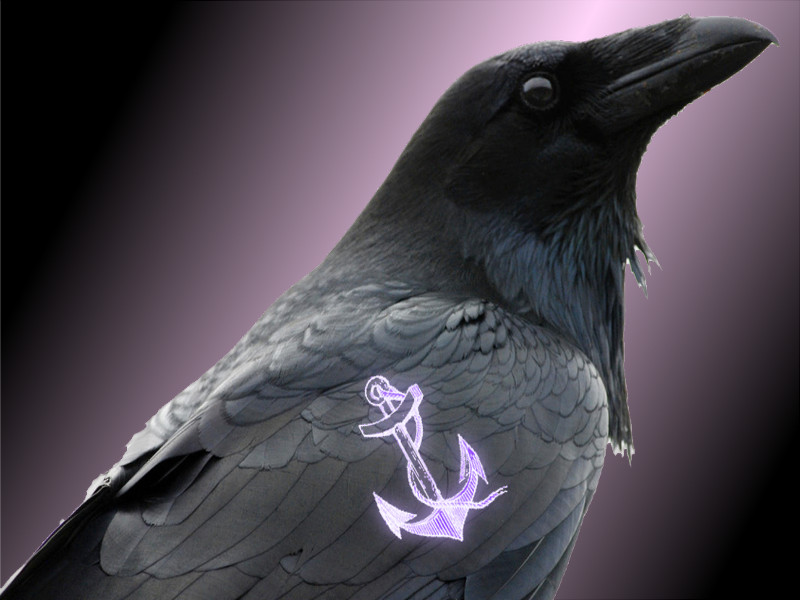 Crows are Raven Mad about Tatts